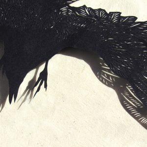 Corbeau : detail